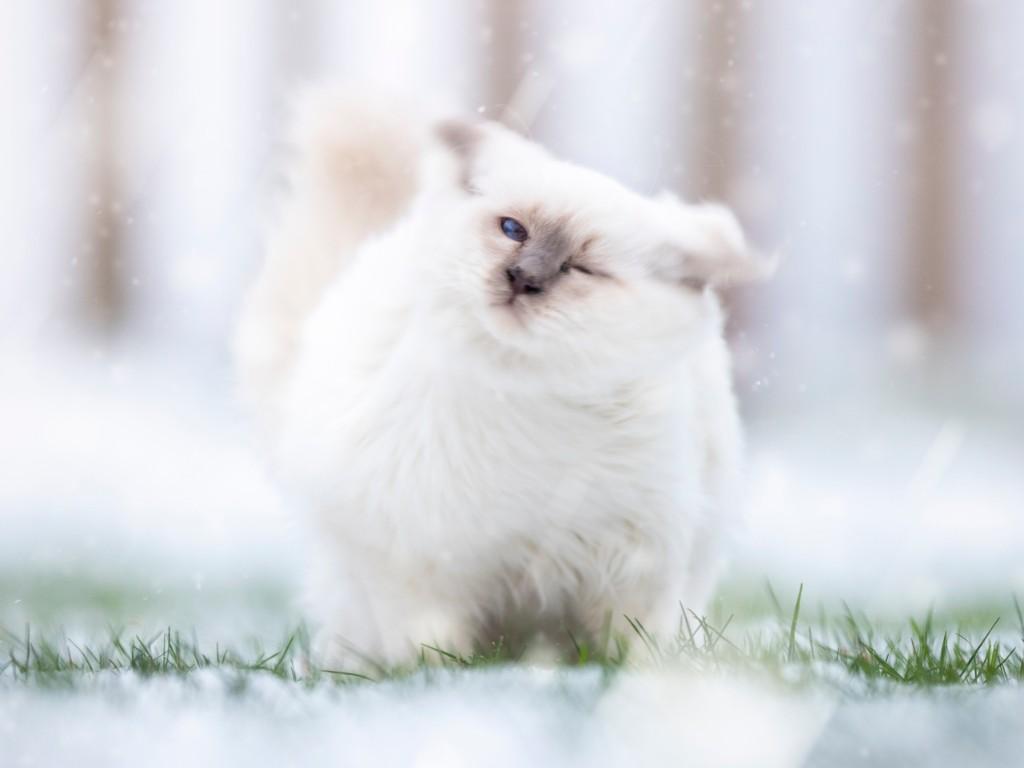Séance photos pour chats