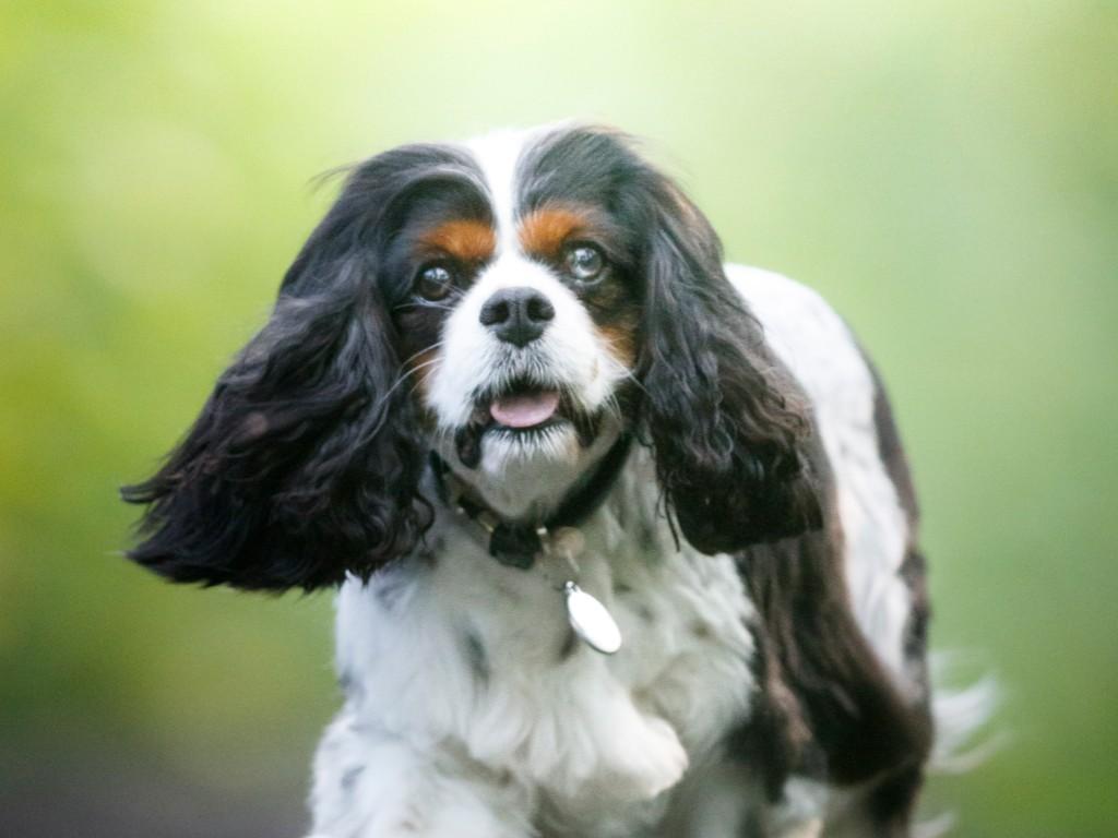 Séance photos pour chiens