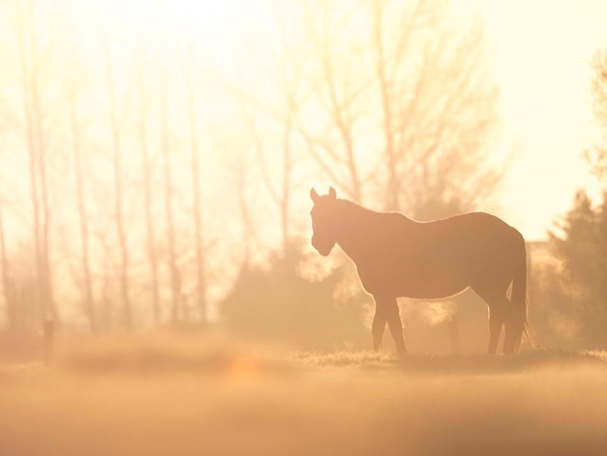 Séance photos pour chevaux